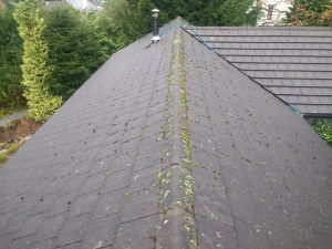 Roof Cleaning Windermere Before